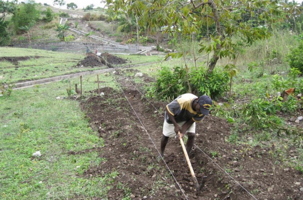 (Ho detto Kenya ma questa foto di Treedom riguarda il progetto su Haiti)